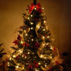Grande distribution de Sapins de Noël